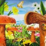 mushroom_garden